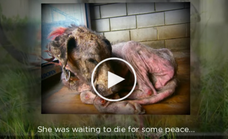 This Dog is waiting for her death to gain some peace, but look what happened.