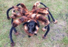 The Mutant Giant Spider Dog victimized people